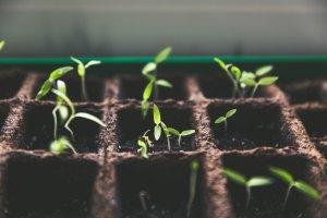 seedlings markus-spiske-104913
