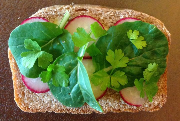 radish sandwich_JL